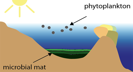 Illustration of microbial community.