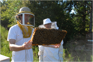 Jamie Ellis inspects a comb of honey bees at an apiary.