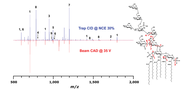 Tandem mass spectrometry provides sufficiently detailed spectra to make a structural characterization