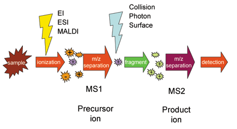 Tandem M Spectrometry (MS/MS) - MagLab on