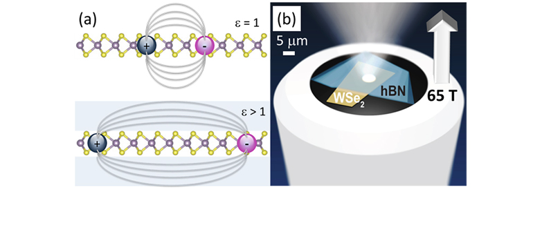 (a) 2D excitons in monolayer WSe2 (b) The experiment: monolayer WSe2 is affixed to an optical fiber and encapsulated.