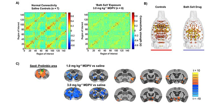 3,4-methylenedioxypyrovalerone (MDPV) dose-dependently reduces functional connectivity with the nucleus accumbens (NAc)