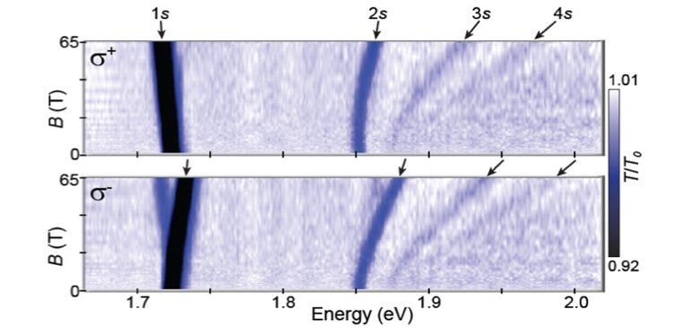 Circularly-polarized optical spectra from 0-65 teslas of monolayers of WSe2.