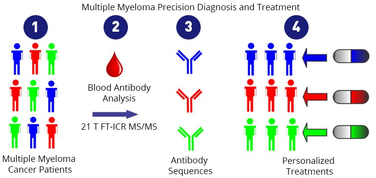 1. Patients with multiple myeloma produce different antibodies, depending on which cells are cancerous. 2. Scientists use FT-ICR MS/MS to examine the antibodies. 3. They can tell exactly which antibodies a patient is producing. 4. This knowledge allows them to personalize treatment for each patient.