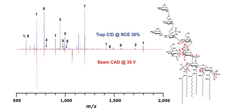 Tandem mass spectrometry provides sufficiently detailed spectra to make a structural characterization.