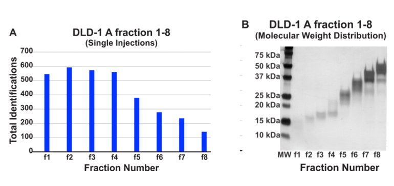 Number of structurally unique proteins identified per single LC-MS/MS injection