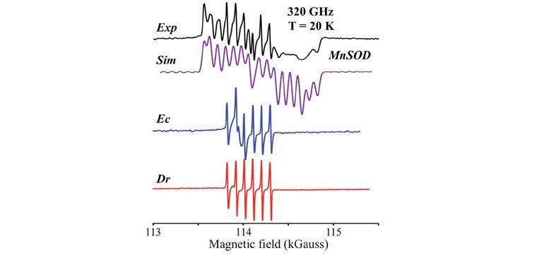 Simulations of high frequency (320 GHz) high magnetic field derivative display EPR spectra of Mn2+Sod and of the Mn2+ of Dr using EasySpin.