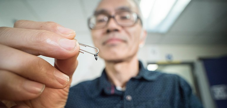 MagLab materials scientist Ke Han with tiny samples of manganese gallium, which has shown promise for magnetic applications.